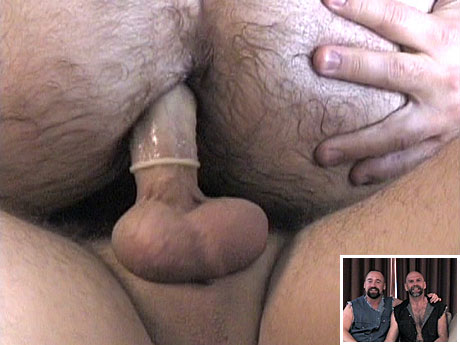 Gay Bears Hairy : Large guys blowing and fuck hard!