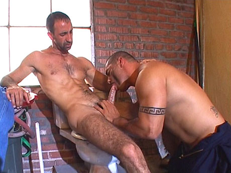 Gay Bears Hairy : A swollen ramrod for gay hairy men's throat!