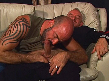 Gay Bears Hairy : Strong gay bears wrap their lips around rods!